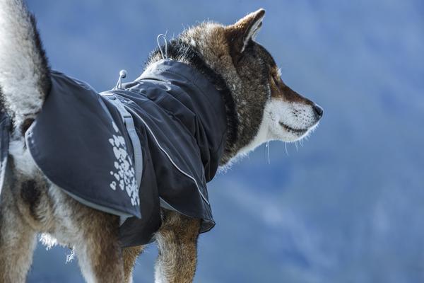 плащ Monsoon Coat на Zoo-Ostrov.ru